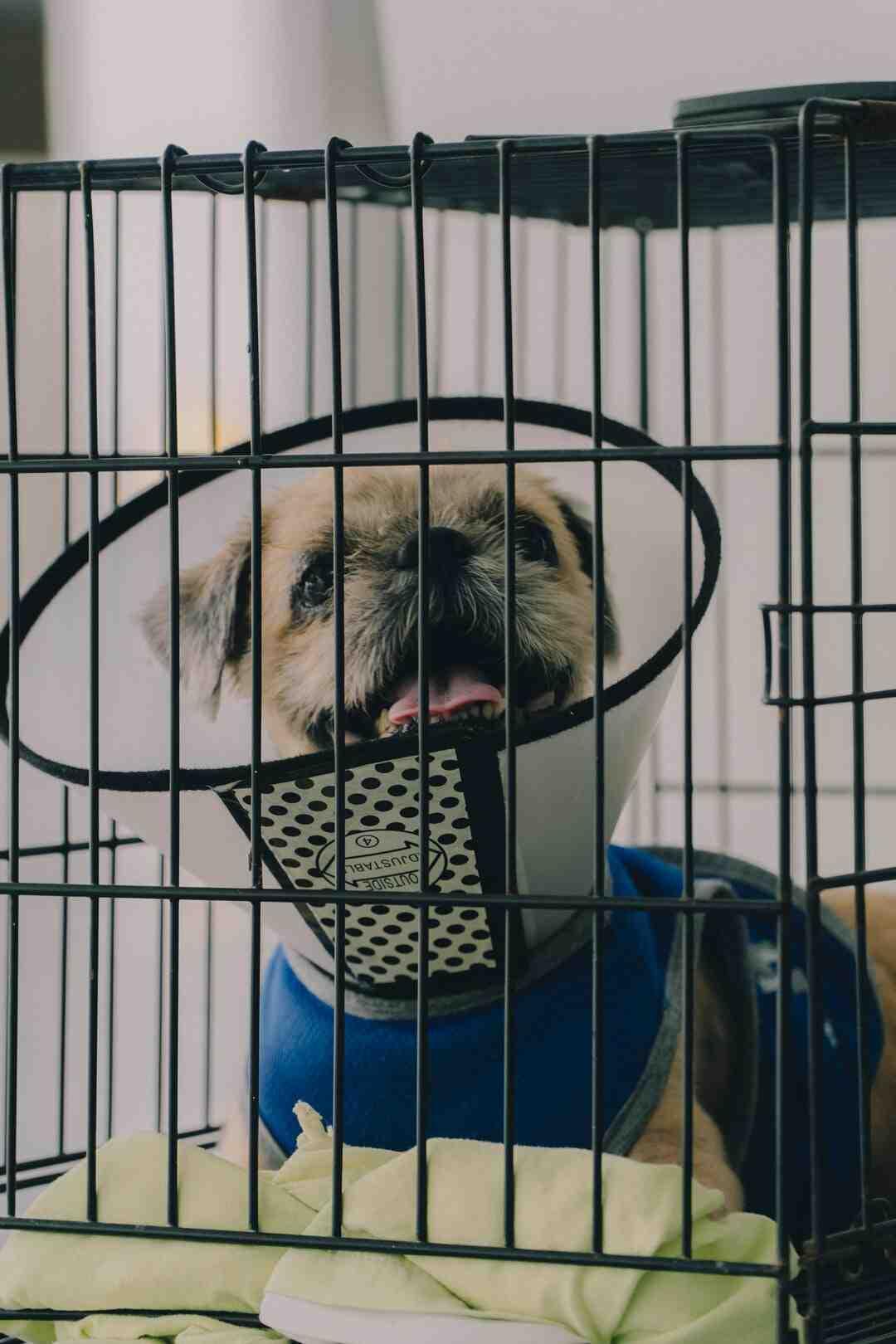 Comment isoler niche pour chien