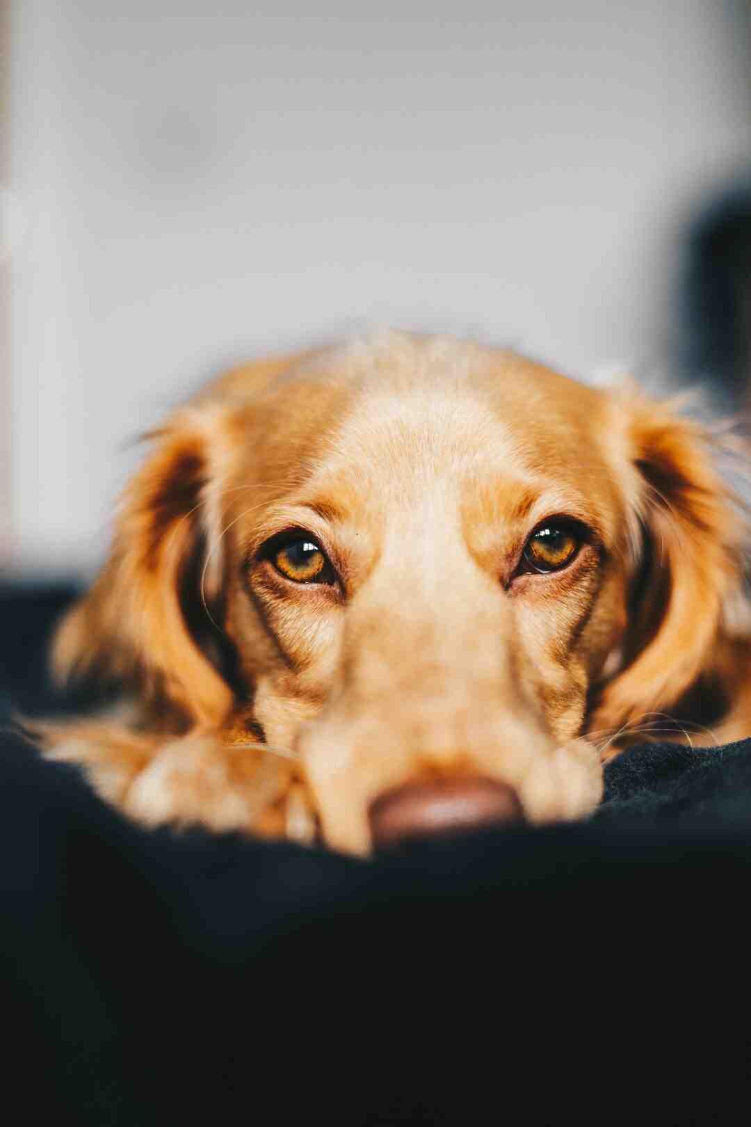 Quelles solutions pour isoler une niche pour chien ?